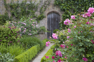 Roses at Sissinghurst #NT